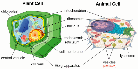 Cell Structure And Organization
